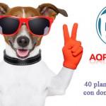 Sorteo de 40 planes de Hosting y Domino por Aniversario de AQPHost